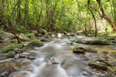 Fiume in profondità nella foresta pluviale della montagna Fotografie Stock Libere da Diritti