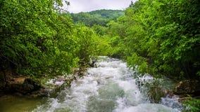 Fiume rapido della montagna che entra nella foresta verde fresca video d archivio