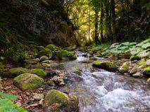 Fiume roccioso in foresta Immagini Stock Libere da Diritti
