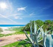 Fiume Santo海岸线在一个晴天 免版税库存照片