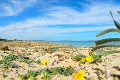 Fiume Santo beach seen from the ground Royalty Free Stock Image