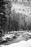 Fiume scenico di inverno di Snowy che entra nelle alpi julian delle montagne in bianco e nero, la Slovenia Immagine Stock Libera da Diritti