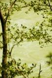 Fiume scorrente incorniciato dalle filiali di albero Immagini Stock