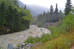 fiume selvaggio della montagna Fotografia Stock