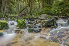 """Fiume selvaggio fondo di rilassamento dell'acqua nel †della natura """" fotografie stock"""