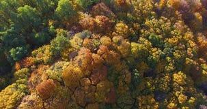 Fiume soleggiato del prato della foresta ed il villaggio sull'orizzonte archivi video