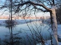 Fiume Sysa ed alberi nevosi nell'inverno, Lituania Immagine Stock