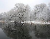 Fiume Sysa ed alberi nevosi nell'inverno, Lituania Fotografia Stock Libera da Diritti