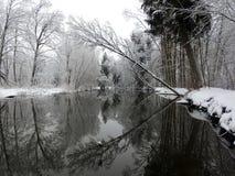 Fiume Sysa ed alberi nevosi nell'inverno, Lituania Fotografie Stock