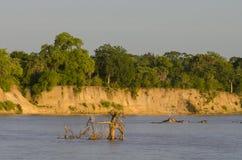 Fiume Tanzania di Rufiji immagine stock