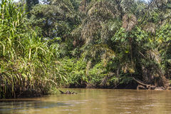 Fiume in Tortuguero, Costa Rica Immagine Stock Libera da Diritti