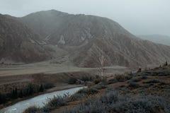 Fiume un giorno di estate, viaggio di Katun attraverso Altai, fiume della montagna Fotografia Stock Libera da Diritti