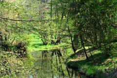 Fiume in un parco verde Fotografie Stock Libere da Diritti