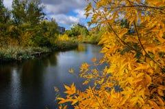 Fiume in una foresta deliziosa di autunno al giorno soleggiato Immagini Stock