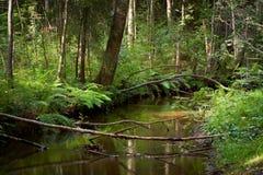 Fiume in una foresta selvaggia Fotografia Stock
