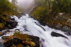 Fiume veloce e freddo della montagna che entra fra le rocce muscose e gli alberi verdi nella Repubblica di Altai Fotografie Stock