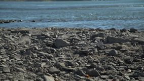 Fiume veloce e la spiaggia di pietra archivi video