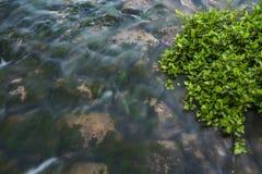 Fiume vicino della pianta acquatica verde, porcellana fotografia stock libera da diritti