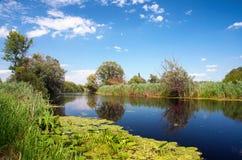 Fiume Zala nel lago Balaton, Ungheria fotografia stock libera da diritti