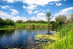 Fiume Zala nel lago Balaton, Ungheria fotografia stock
