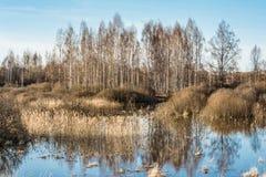 Fiumi e foreste dell'alta marea senza foglie nella molla in anticipo, un chiaro giorno soleggiato Immagini Stock