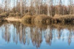 Fiumi e foreste dell'alta marea senza foglie nella molla in anticipo, un chiaro giorno soleggiato Immagine Stock Libera da Diritti