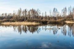 Fiumi e foreste dell'alta marea senza foglie nella molla in anticipo, un chiaro giorno soleggiato Immagine Stock