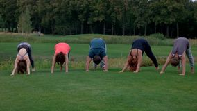 Five adult people standing in yoga position on green grass. stock video footage