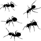 Five Ant Silhouettes Stock Image