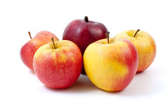 Five apples. Of different breeds isolated on the white background Stock Photography