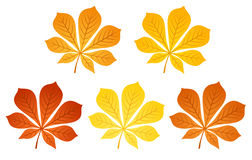 Five autumn chestnut leaves. Vector illustration. Royalty Free Stock Photography