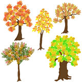Five autumn leafy trees Stock Images
