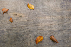 Five autumn leaves on a wooden board Stock Image