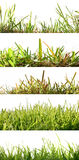 Five backgrounds set grass backlit Royalty Free Stock Photos