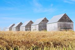Five barns in field Royalty Free Stock Image
