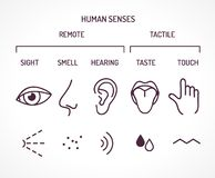Five basic human senses as sight smell hearing taste and touch vector illustration