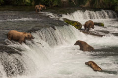 Five bears salmon fishing at Brooks Falls Royalty Free Stock Photos