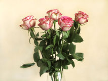 Five beautiful pink rose over beige background Royalty Free Stock Images