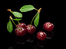 Five berries of a cherry on a green small stalk Stock Photography