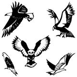 Five birds of prey. Five stylized birds of prey: Bald eagle, condor, horned owl, falcon and kestrel Stock Images