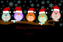 Five Birds with Santa Hat on Tree Branches Stock Photo