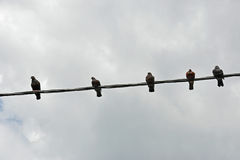 Five birds  on a wire Royalty Free Stock Images