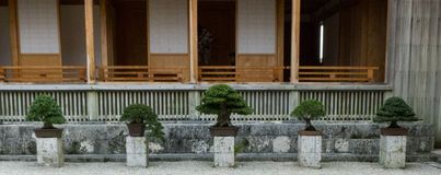 Five bonsai trees in a line Royalty Free Stock Photo