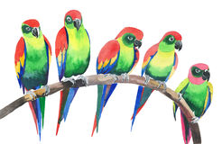 Five bright colorful cute beautiful jungle tropical yellow and green parrots on a branch watercolor hand illustration Royalty Free Stock Photography