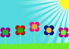 Five bright flowers and sunrays Royalty Free Stock Images
