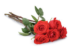 Five bright red roses isolated on white Stock Images
