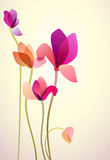 Five bright wild flowers. Vector illustration of five bright wild flowers Stock Image