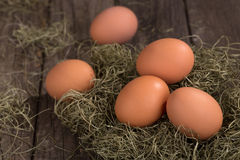 Five Brown Eggs Stock Photography