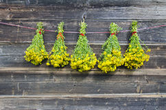Five bunch fresh medical herbs St John's wort hang on wooden wall Stock Image
