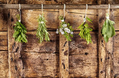 Five bunches of assorted fresh herbs hanging up Stock Photo